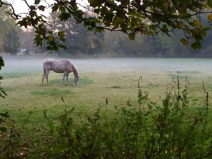 Foggy Morning , Horse -