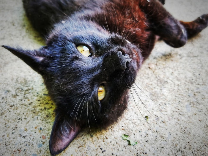 Just my outdoor kitty, Albie, posing for a shot.... as always! Hello Kitty I Love My Cat Animal Animal Head  Animal Themes Black Color Cat Close-up Domestic Cat Feline Pets Posing Posing For The Camera Rolling Around Samsung Galaxy S8+ Samsungphotography Whisker