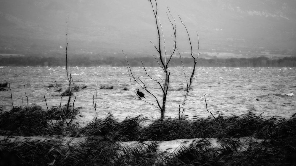 A lonely bird standing on a dead tree, in the middle of a lake. Weather Apocalyptic Avian Bird Black And White Clouds Day Environment Lake Moody Weather Nature No People Outdoors Plant Rainy Scenics - Nature Tree Water
