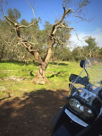 Home Olive Tree Adventure Adv Redcarpet Salento Apúlia Hello World Check This Out Relaxing Taking Photos Enjoying Life Myworld Awesome Hello World Relaxing MYheart Freedom Love Nature