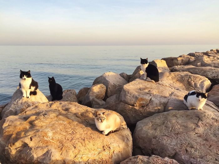 Cats on rocks against sea