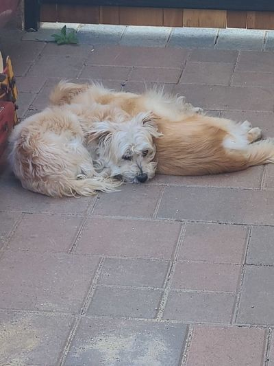 High angle view of dog sleeping on sidewalk