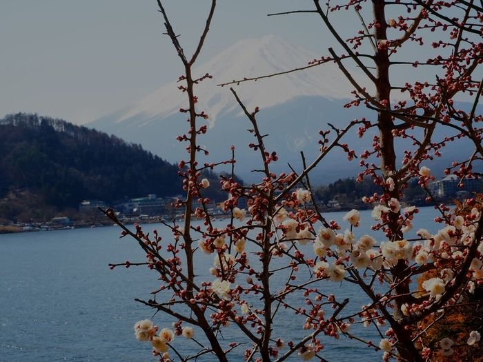 富士山 Mountain Beauty In Nature Sky Flower 🌸spring Day Clear Sky 日本2017年 From My Lens Sakura2017 Lake Freshness