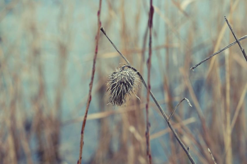Best EyeEm Shot EyeEm Best Shots EyeEm Nature Lover Beauty In Nature Bestoftheday Close-up Day Dried Plant Filigran Flowers Focus On Foreground Fragility Freshness Growth Nature Nature_collection No People Outdoors Plant Tranquility
