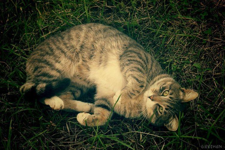 Cat♡ Wild Cat Sweet♡ Lovely Love Animal Mine Grethen_Nahtigall Canon1100d