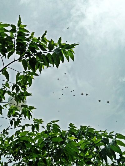 After The Rain After The Rain Comes Sun Balloons Beauty In Nature Branch Flying Flying Ballons Growth Leaf Low Angle View Nature Sky Tree Perspectives On Nature