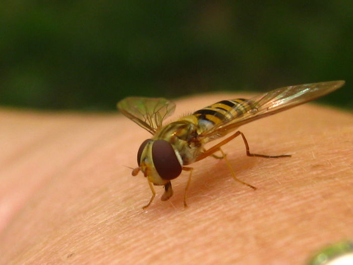 Fly Nature