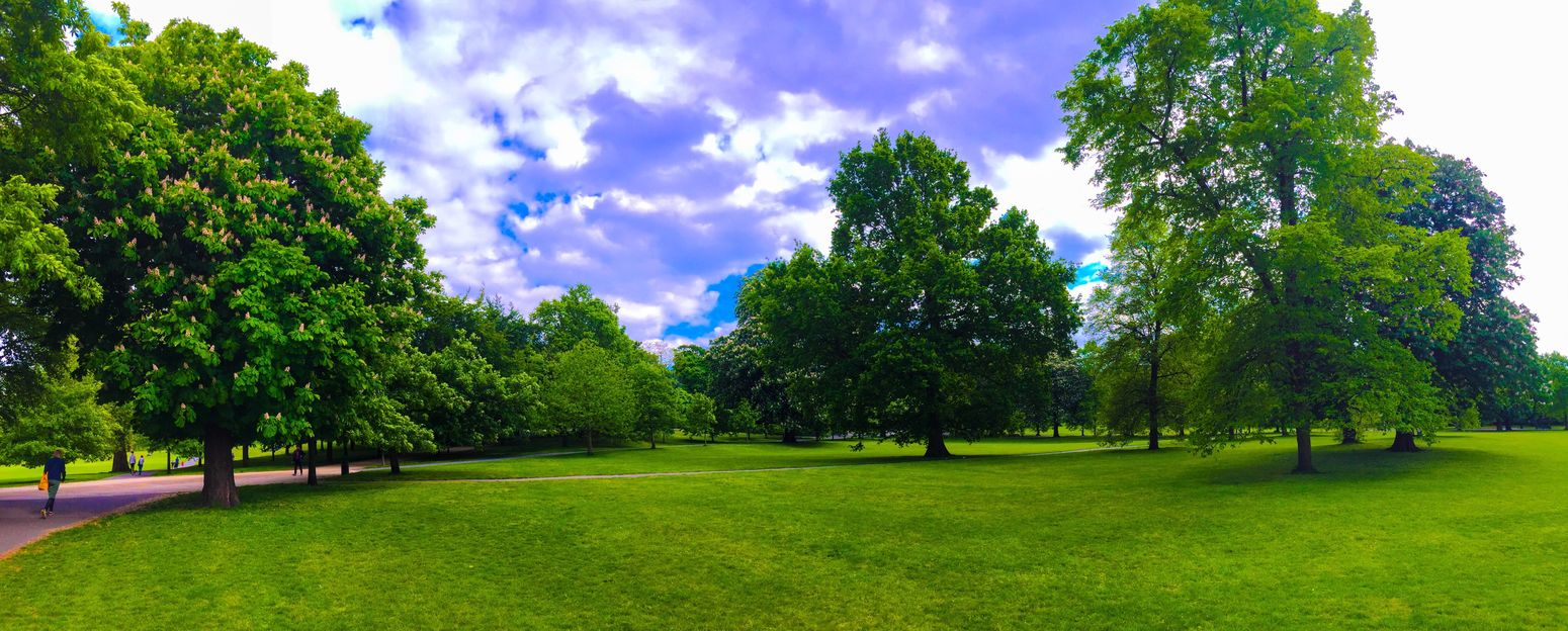 Walk in the park Check This Out Hanging Out Hello World Hi! Relaxing Taking Photos Enjoying Life Taking Photos Park Tree Tree_collection  Tree And Sky Sky And Clouds Green Blue London England FortBhullar Capturing Freedom Morning