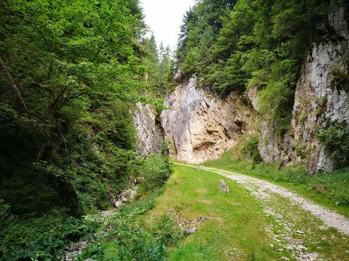 Zarnesti The Way Forward Footpath Nature Non-urban Scene Beauty In Nature
