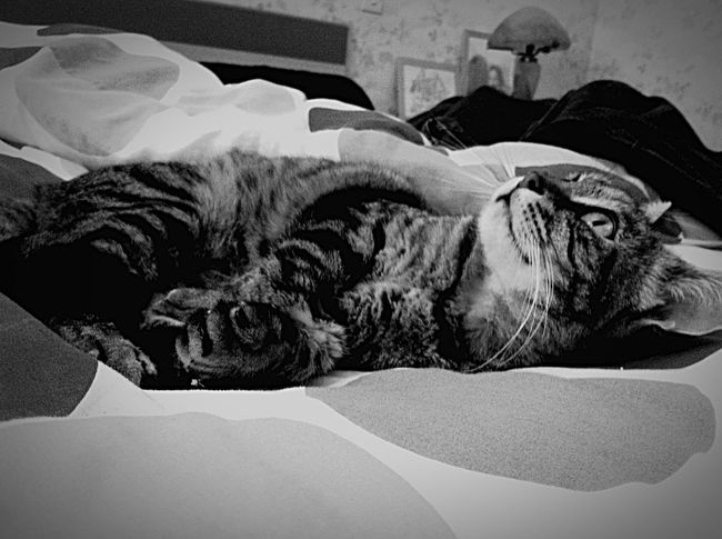 Black And White My Cat My Lovely Cat 💖