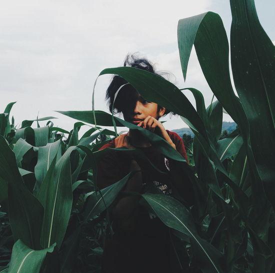 Man Hiding Amidst Crops On Field