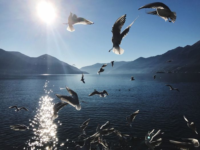Ascona/Ticino Bird Flying Animals In The Wild Spread Wings Freedom Sunlight Flock Of Birds No People Water Sky Day Nature Large Group Of Animals Animal Themes First Eyeem Photo