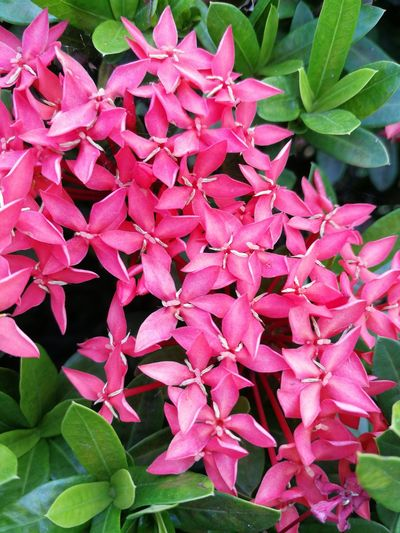 Leaf Growth Beauty In Nature Plant Nature No People Flower Pink Color Petal Day Fragility Green Leaves Outdoors Close-up Red Freshness Flower Head Spike Flower pink flower