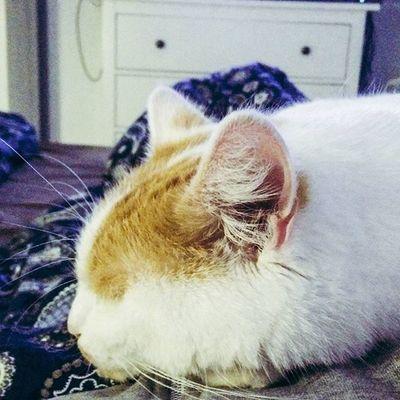 Chillen Cat