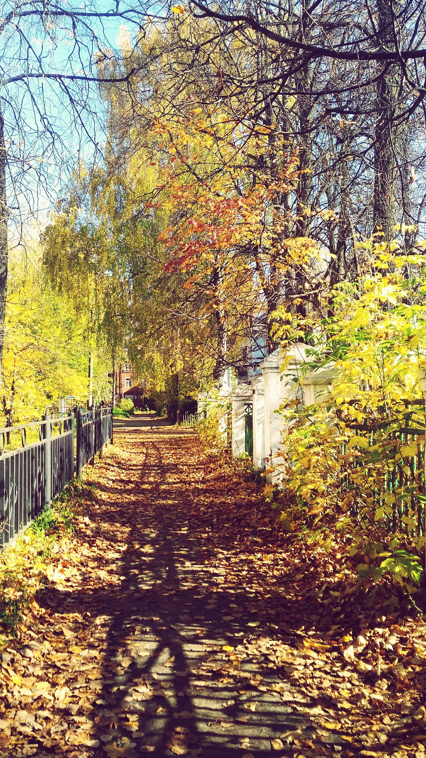 autumn, tree, change, nature, leaf, beauty in nature, the way forward, tranquility, outdoors, day, sunlight, branch, no people, scenics, shadow, walkway, sky