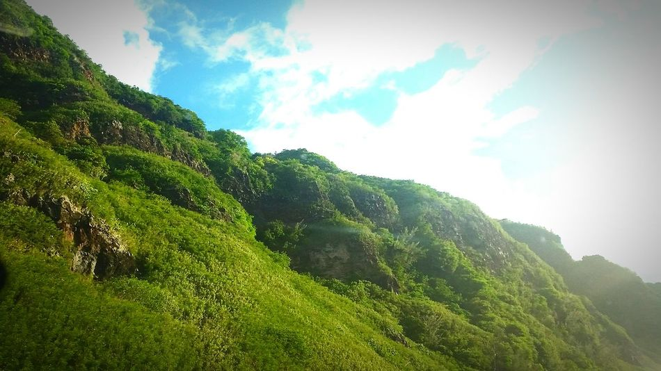 Green Color Tree Nature Sky Beauty In Nature Growth Landscape Cloud - Sky Outdoors No People Day Mountain View route du littoral Reunion Island Dangerous Road Beauty In Nature High Angle View