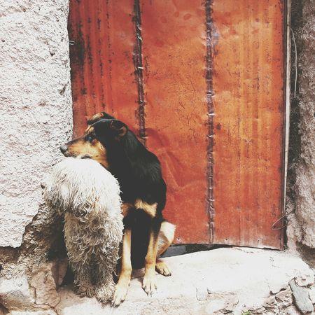 Dogs Dogslife Iruya Argentina Photography