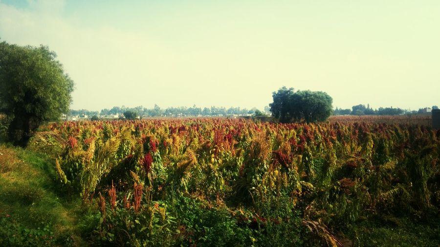 Autumn Colors SanAndresTecomi