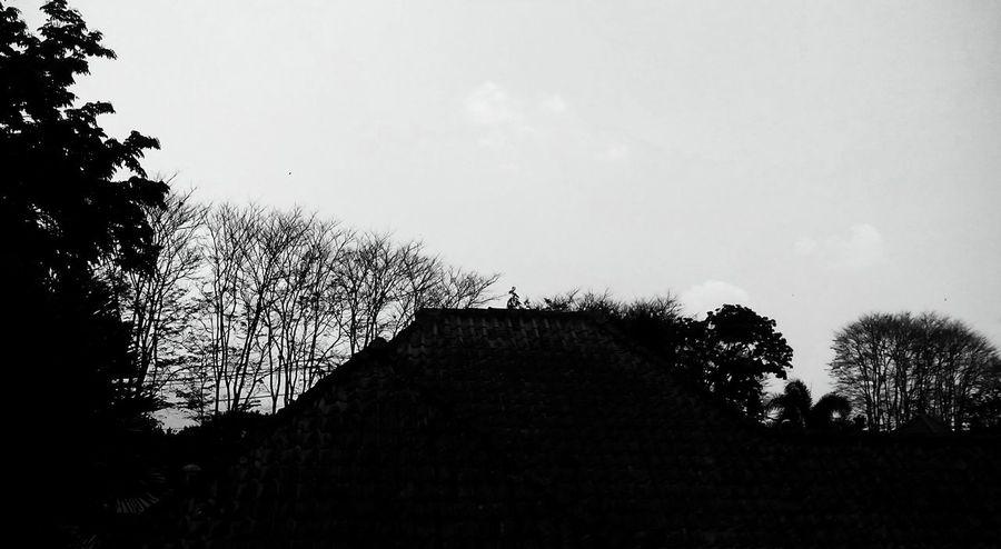 Pure black & white feel like negative Japunan Magelang #indonesia Fotografihp