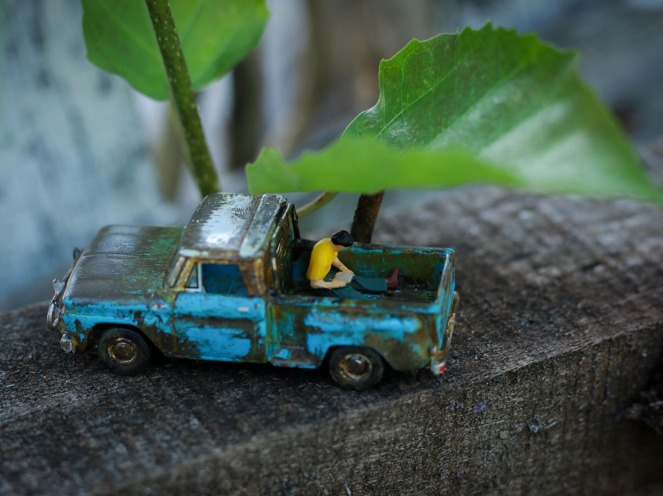 toy, green color, toy car, leaf, selective focus, plant part, day, close-up, car, childhood, nature, wood - material, still life, outdoors, motor vehicle, mode of transportation, transportation, high angle view, creativity, small