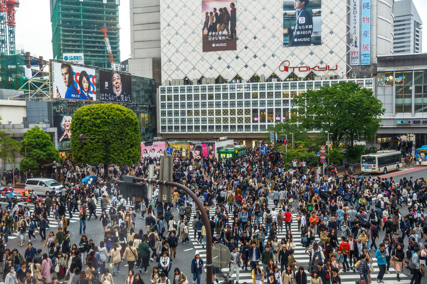 Tokyo, Japan: aerial view from Occitane Cafe of unidentified pedestrians in Shibuya Crossing, one of the busiest crosswalks in the world.Shibuya Crossing a popular attraction in Tokyo City Crosswalk Japan Japanese  Japanese Culture Road Shibuya Shibuya Crossing Shibuya Tokyo Tokyo Tokyo Street Photography Tokyo,Japan Traffic Traffic Jam Adult Aerial View Architecture Building Building Exterior Built Structure City City Life Crosswalks Crowd Day Group Of People Large Group Of People Men Mode Of Transportation Office Building Exterior Outdoors Pedestrians Pedestrians Walking People Plant Popular Photos Real People Shibuya Station Skyscraper Street Transportation Tree Women