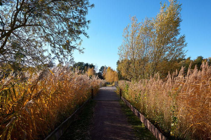 Autumn in Germendorf Brandenburg Plant Tree Direction The Way Forward Sky Footpath Nature No People Landscape Tranquility Tranquil Scene Growth Land Clear Sky Day Beauty In Nature Diminishing Perspective Scenics - Nature Autumn Road Outdoors Change Treelined Long