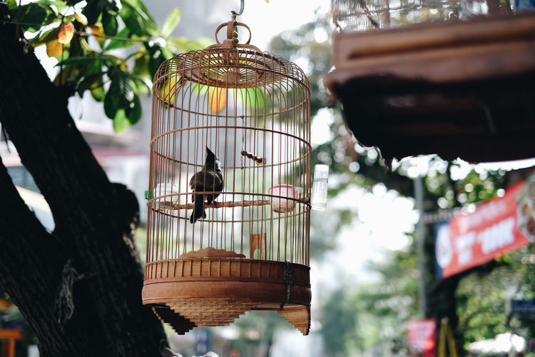 Animal Themes Animal Wildlife Animals In The Wild Bird Bird Feeder Birdcage Cage Close-up Day Focus On Foreground Food Hanging Low Angle View Mammal Nature No People One Animal Outdoors Perching Tree