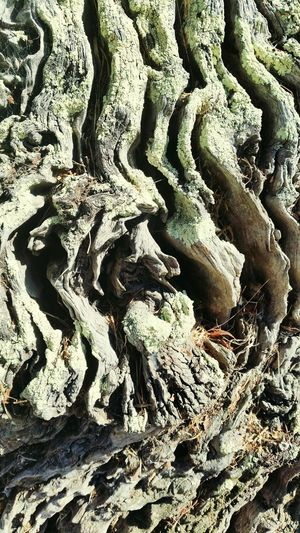 Australianphotographer Through My Lens Mobilephone Photography Nature Tree Full Frame Backgrounds No People Growth Beauty In Nature Close-up Through My Lens Australian Outdoors Day Nature Treetrunk Patternsandtexture treebark