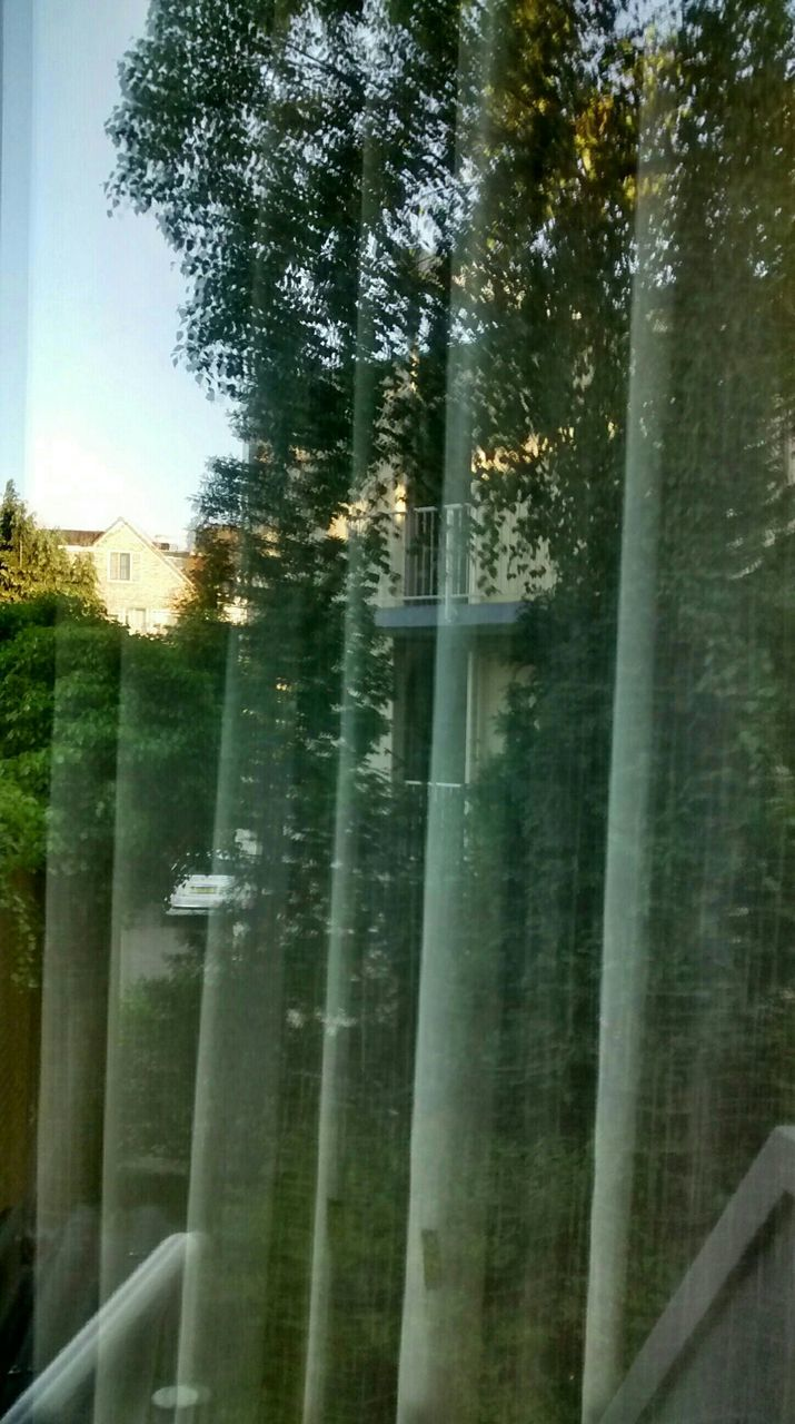 tree, window, no people, nature, day, water, growth, outdoors, beauty in nature, curtain, close-up, plant, sky, freshness