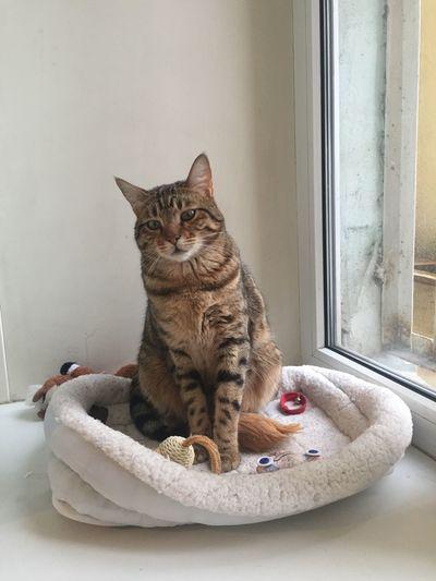 Portrait of cat sitting on window