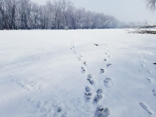 Walk On The Water Snow Cold Temperature Winter Animal Wildlife Frozen Animal No People