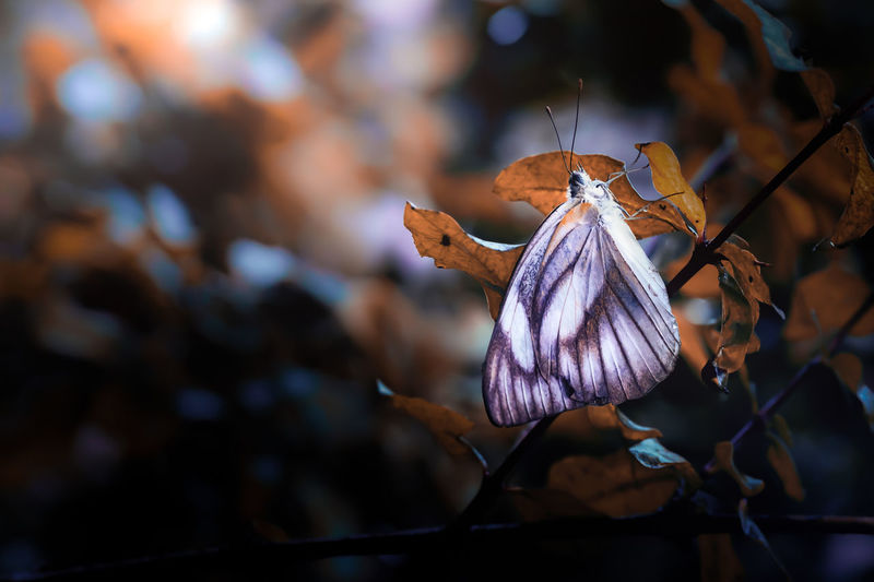 Beautiful macro image of a butterfly sleeping on branches after rain