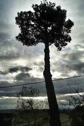 Albero Cielo Ombre