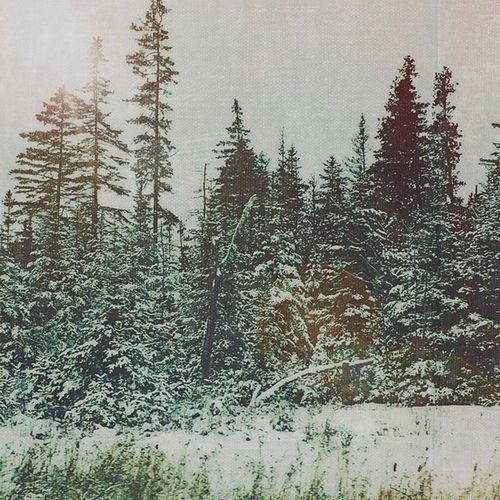 Snow Winterwonderland Wintertime Softtones Holiday