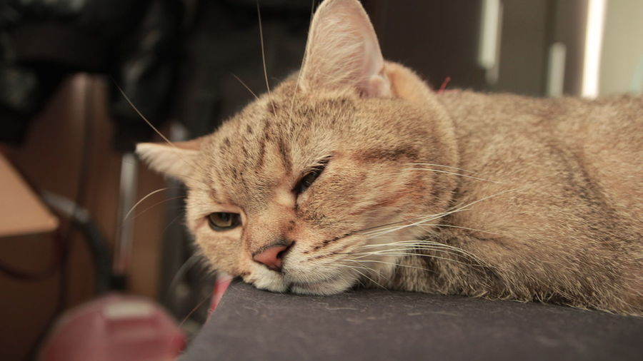 PUNI I miss you Cat Cats Of EyeEm Day Domestic Cat Lazy Cat No People One Animal ねこ 嚕嚕呼嚕 猫 키티