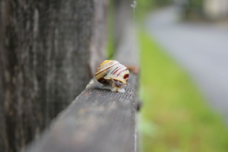 Close-up of snail on wooden surface
