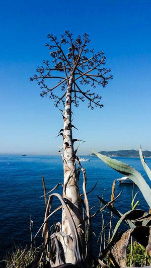 Meer Blue Jacht Bucht Blue Ocean Blue Sky Balearen Summerday Ibiza Insel Tree Kahler Baum Geäst Palmenart
