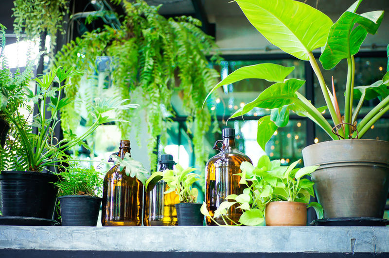 Potted plants on green bottles