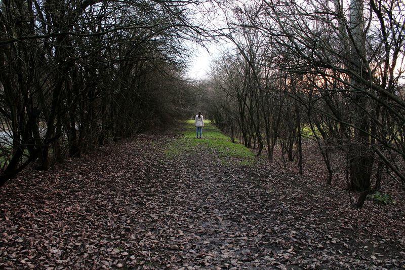 La vie.. Sentiero Vie Trees Nature Green Alberi Life Decision Percorso Prospective Prospettiva Sky Cielo