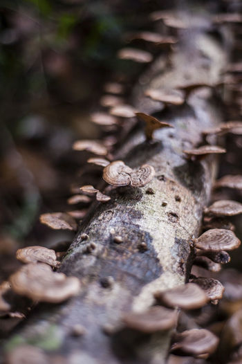 Close-Up Of Funguses Growing On Tree Branch