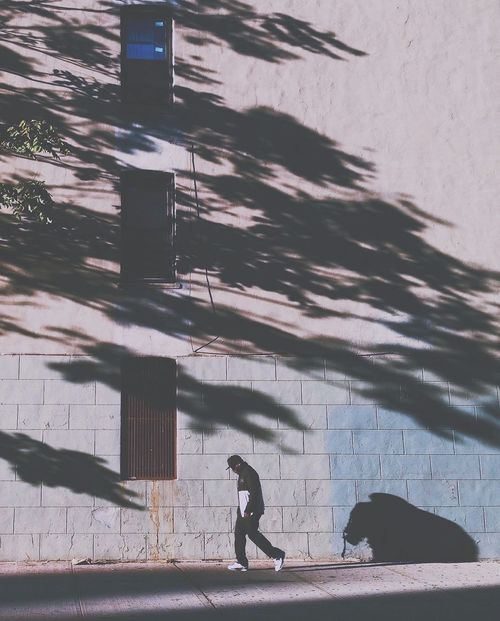 Capture The Moment Shadows Silhouette Autumn Light