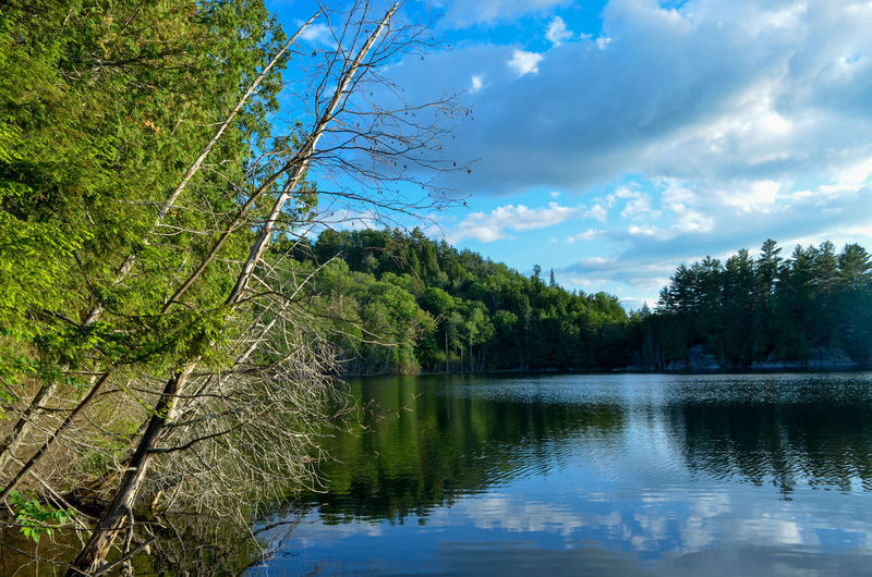 Tree Water Forest Lake Reflection Pine Tree Sky Cloud - Sky Green Color