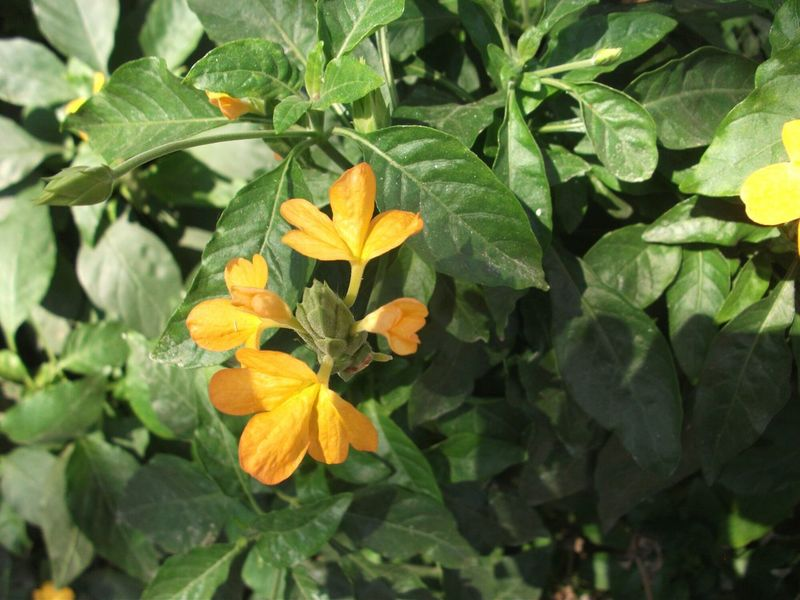 Plants 🌱 Plantes Fleurs Flowers Yellow Flowers Jaune🌻 India