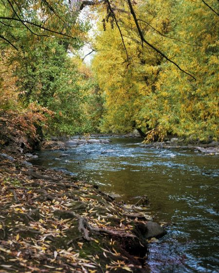 Boulder Creek Film Photography Koni-omega Medium Format Tree Water Forest Lake Branch Leaf Reflection Landscape