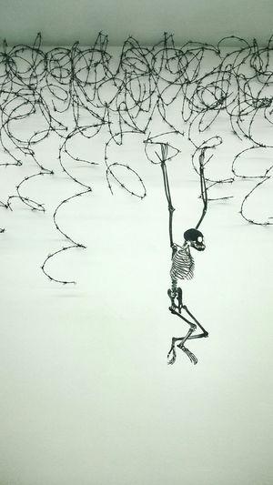 Nice art and weird people Art Kunst Exhibition Monkey Skeleton Streetart Barbwire