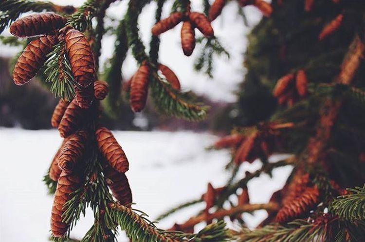 Went for a walk the other day @k_mac1213 was there in spirt Photography Photographer Winter Landscape Myphoto L4l Instagood VisitNovaScotia Novascotia Thankyoucanada Tree Ice Snow Canon CanonT5 Imisssummer Bokeh