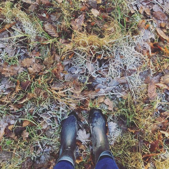 Winter Icy Ice Wellington Boots Wellies  Leaves Cold Forest