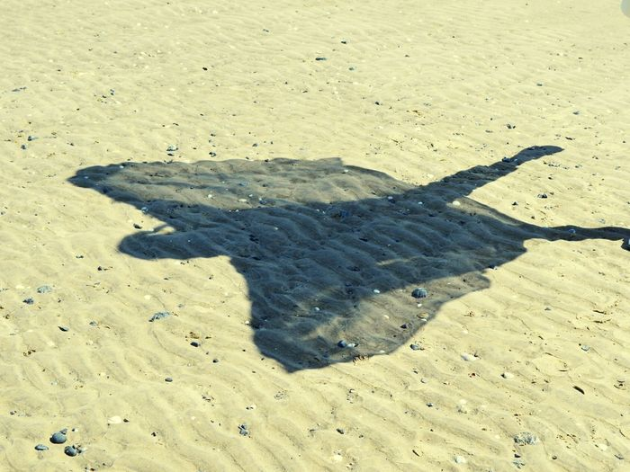 Shadowplay Summertime Angels Are Everywhere Beach Shadow Sand Sunlight Close-up Sandy Beach The Still Life Photographer - 2018 EyeEm Awards