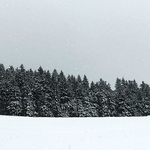 It's Cold Outside Winter Trees Hotzenwald Blackforest Showcase: January It's Snowing ! Black And White Nature On Your Doorstep Monochrome Minimalism Simplicity From My Point Of View Shades Of Grey Winter Wonderland Landscape_Collection Snow Betterlandscapes