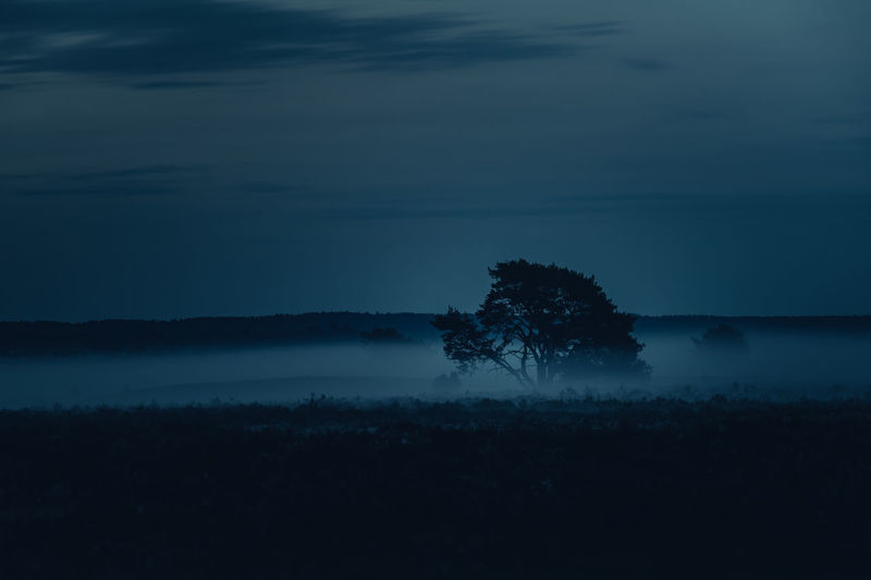 Tranquility Tree Tranquil Scene Beauty In Nature Silhouette Sky Scenics - Nature Plant Cloud - Sky No People Nature Water Non-urban Scene Environment Landscape Idyllic Outdoors Land Growth Hazy  Nebel Lüneburger Heide Bevore Sunrise Blue Hour Blaue Stunde